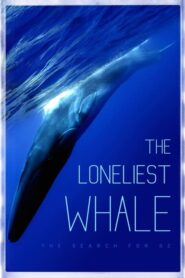 The Loneliest Whale: The Search for 52 Online Lektor PL CDA